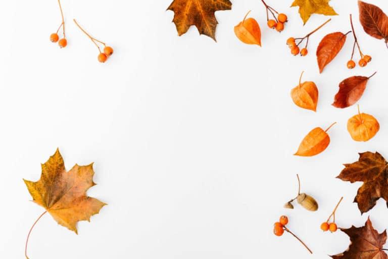 Automne - Idées d'activités de saison