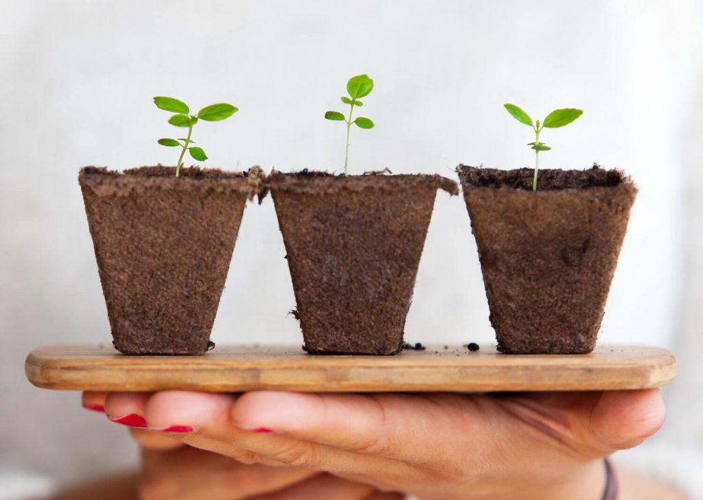 À faire au printemps : Jardiner