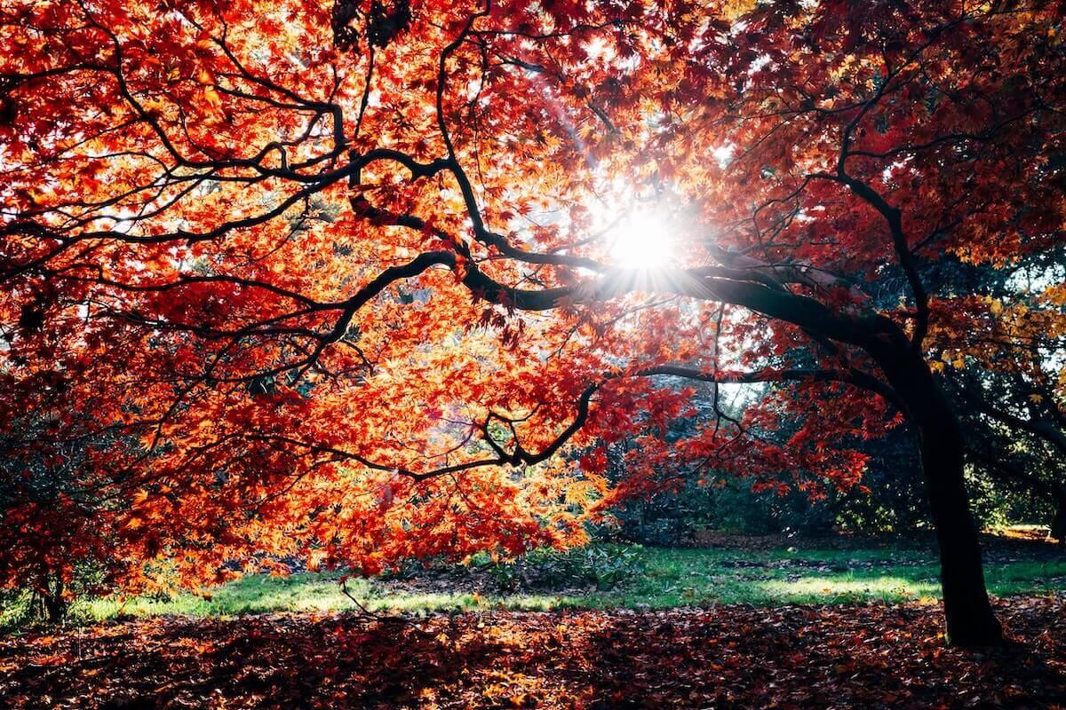 Se ballader en automne dans un parc pour les belles couleurs